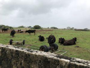 牧場が多く、どんどん続いていく