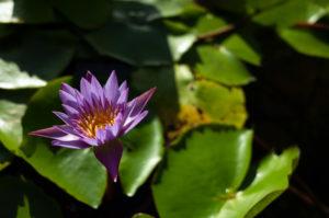 紫色の花びらのお花