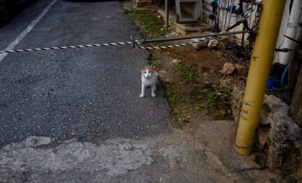 出会ったのは猫くらい