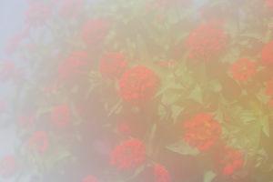 天然ソフトフィルターライクな写真