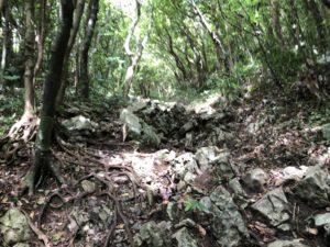 登山道の様子
